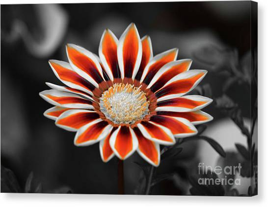 Canvas Print featuring the photograph Orange Only Gazania by Patti Whitten