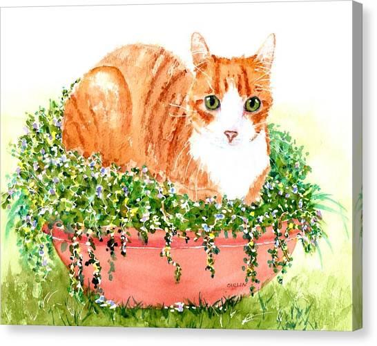 Purebred Canvas Print - Orange Tabby Cat In Flower Pot by Carlin Blahnik CarlinArtWatercolor