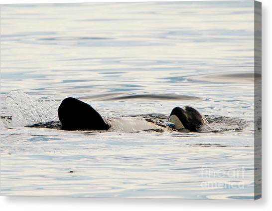 Orcas Canvas Print - Orca Family Time by Mike Dawson