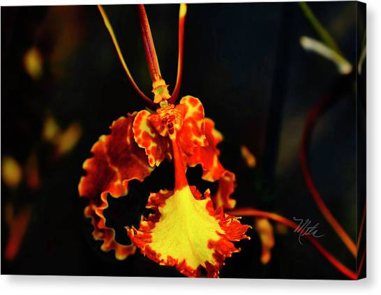 Orchid Study Four Canvas Print