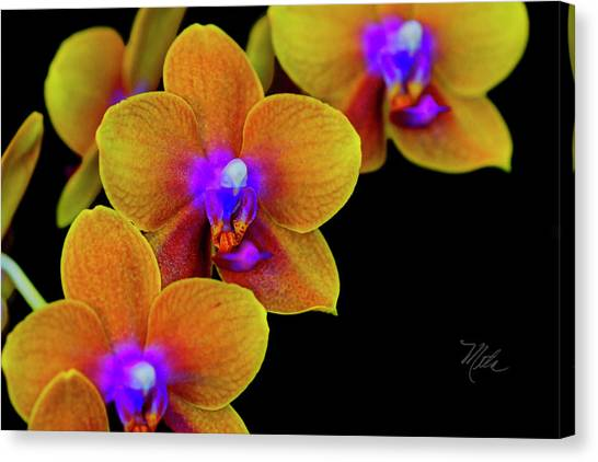 Orchid Study Ten Canvas Print