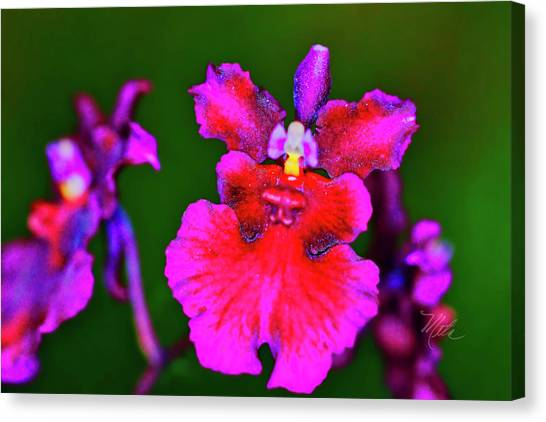 Orchid Study Three Canvas Print