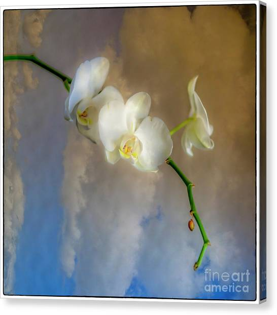 Orchid With Clouds Canvas Print