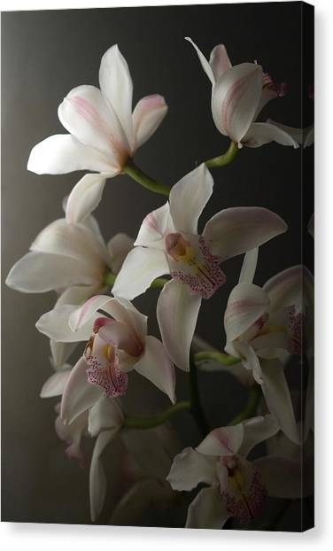 Orchids, Close-up Canvas Print by Kate Connell