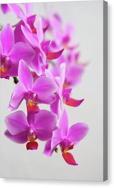 Wedding Bouquet Canvas Print - Orchids by Ejla