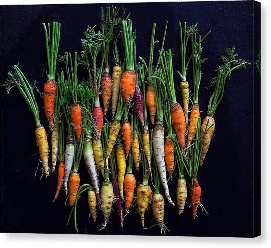 Organic Rainbow Carrots Canvas Print
