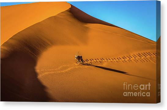 Oryx Crossing Big Daddy Dune, Sossusvlei, Namibia Canvas Print