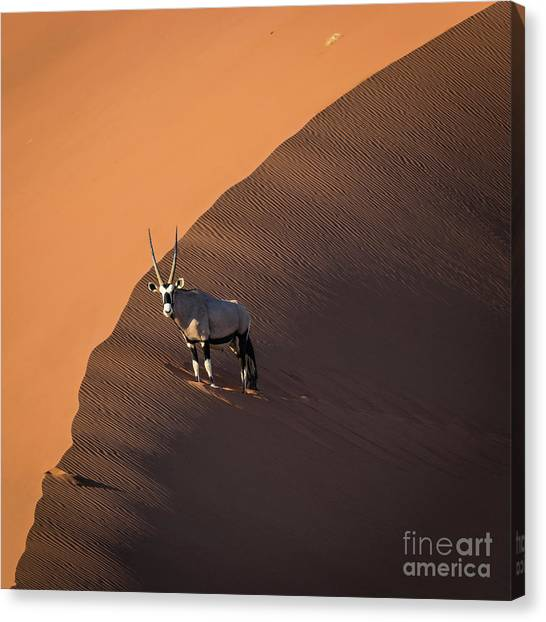 Oryx On The Edge, Namibia Canvas Print
