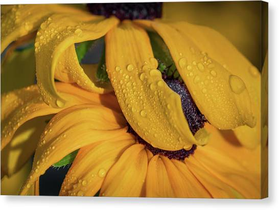 Canvas Print featuring the photograph Overshadowing by Dale Kincaid