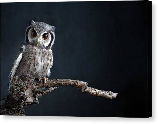 Owl Sitting On A Branch Canvas Print