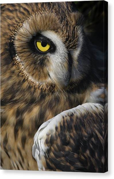 Owl Strikes A Pose Canvas Print