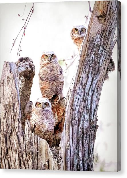 Owl Trio Standing Guard Canvas Print