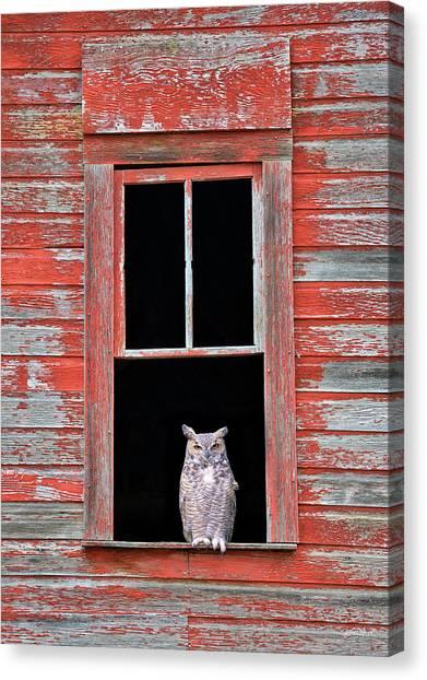 Owl Window Canvas Print