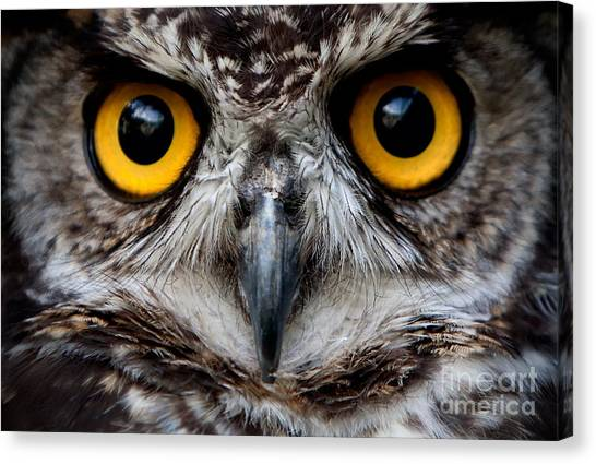 See Canvas Print - Owls Are The Order Strigiformes by Ammit Jack