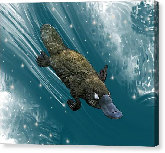 Canvas Print - P Is For Platypus by Joan Stratton