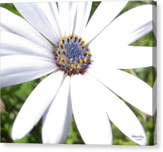 Page 13 From The Book, Peace In The Present Moment. Daisy Brilliance Canvas Print