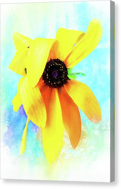 Flopsy - A Charming Wild Black-eyed Susan  Canvas Print