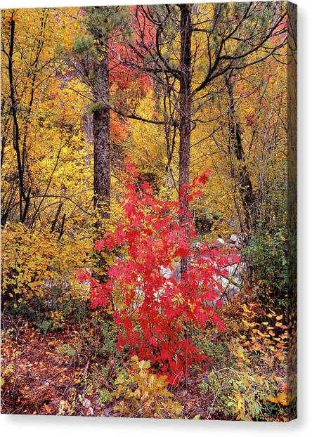 Painted Forest Canvas Print by Leland D Howard