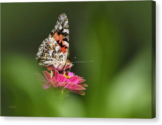 Canvas Print featuring the photograph Painted Lady Butterfly At Rest by Christina Rollo