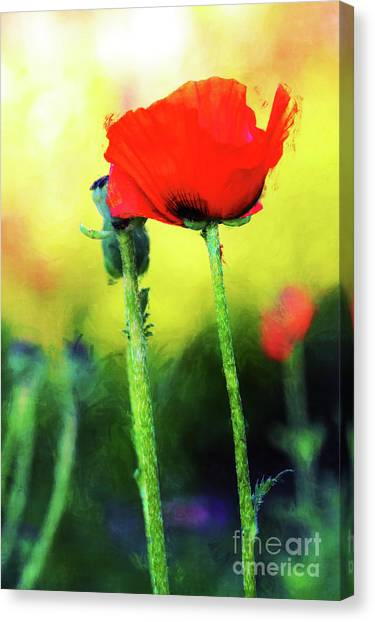 Painted Poppy Abstract Canvas Print