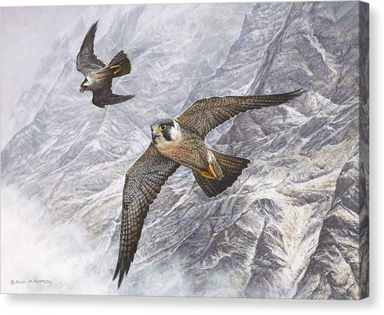 Canvas Print featuring the painting Pair Of Peregrine Falcons In Flight by Alan M Hunt