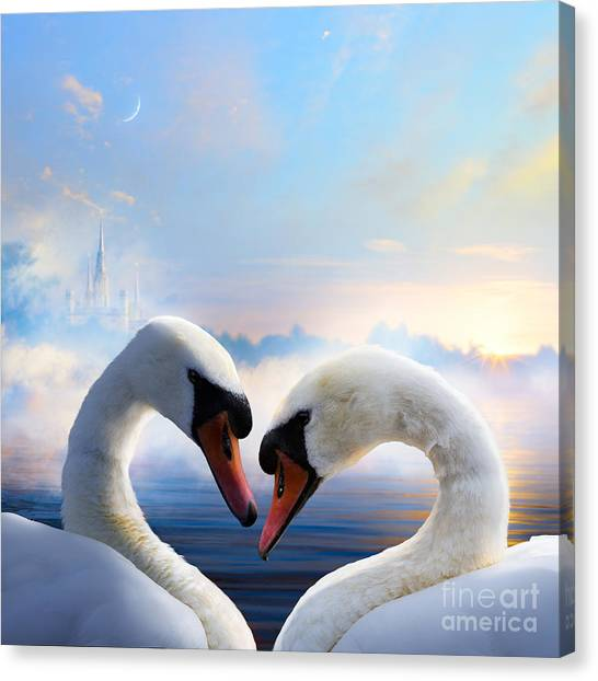 Happiness Canvas Print - Pair Of Swans In Love Floating On The by Konstanttin