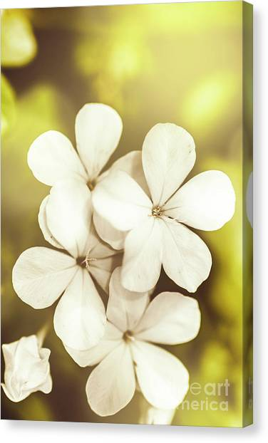 Tropical Plant Canvas Print - Pale Wildflowers by Jorgo Photography - Wall Art Gallery