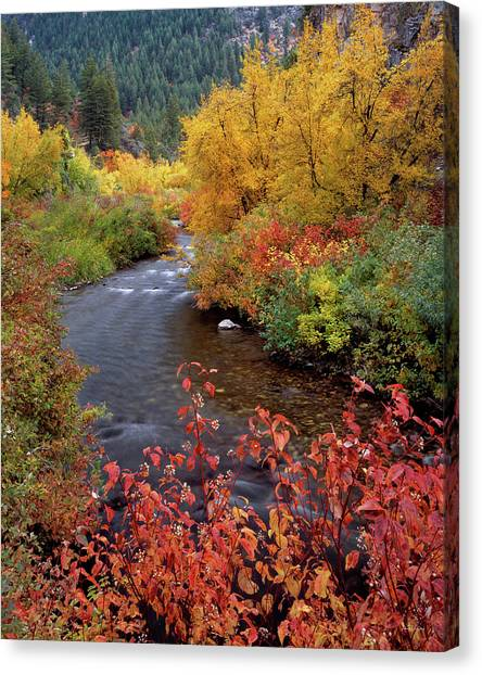 Palisades Creek Canyon Autumn Canvas Print by Leland D Howard