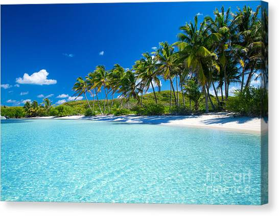 Palm And Tropical Beach Canvas Print by Akugasahagy