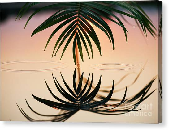Palm Light Reflection Canvas Print by Tim Gainey
