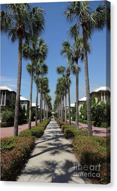Canvas Print - Palm Lined Pathway by Megan Cohen