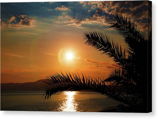 Canvas Print featuring the photograph Palm Tree On The Beach by Milena Ilieva