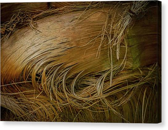 Palm Tree Straw Canvas Print