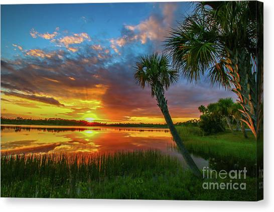 Canvas Print featuring the photograph Palm Tree Sunset by Tom Claud