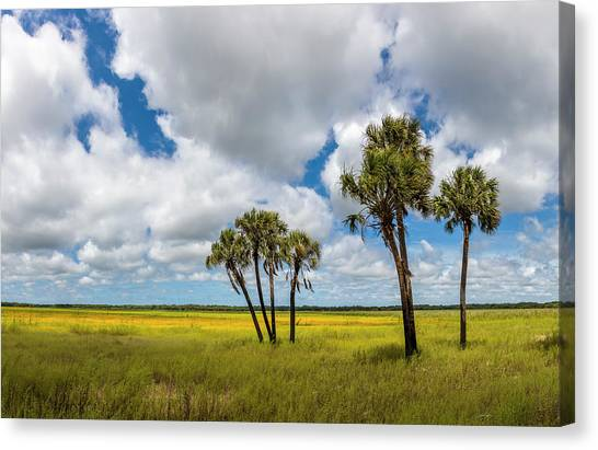 Canvas Print - Palm Trees In The Field Of Coreopsis by Panoramic Images