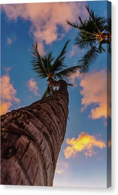 Palm Upward Canvas Print