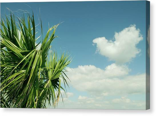 Palms And Clouds Canvas Print