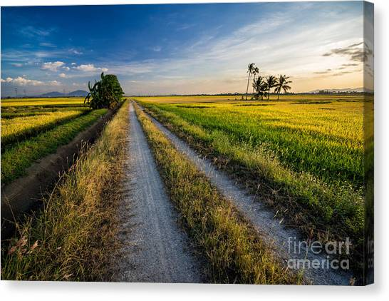 Farmland Canvas Print - Panoramic View Of Paddy View During by Rizal Zawawi