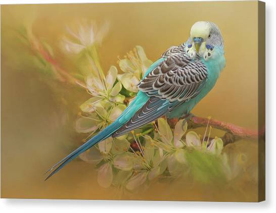 Parakeet Sitting On A Limb Canvas Print