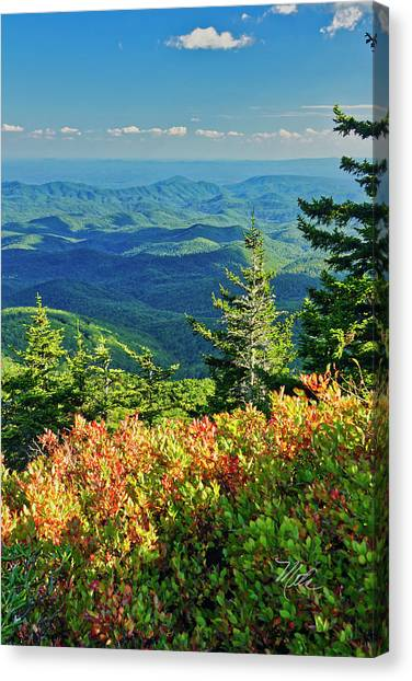 Parkway Tree Canvas Print