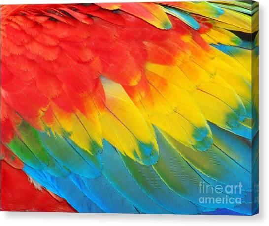 Macaw Canvas Print - Parrot Feathers, Red And Blue Exotic by Edelwipix