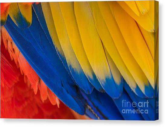 Macaw Canvas Print - Parrot. Multi-colored Feathers. Macaw by Roman Khomlyak