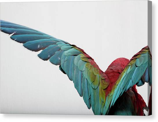 Parrot Canvas Print by Zomi