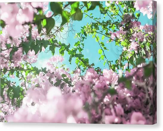 Floral Dreams II Canvas Print