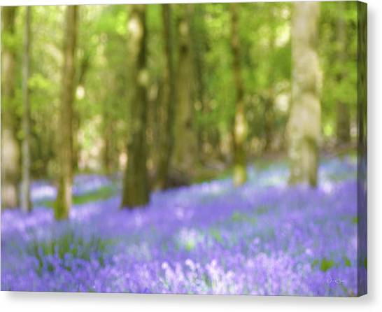 Pause Among The Bluebells Canvas Print by Norma Slack
