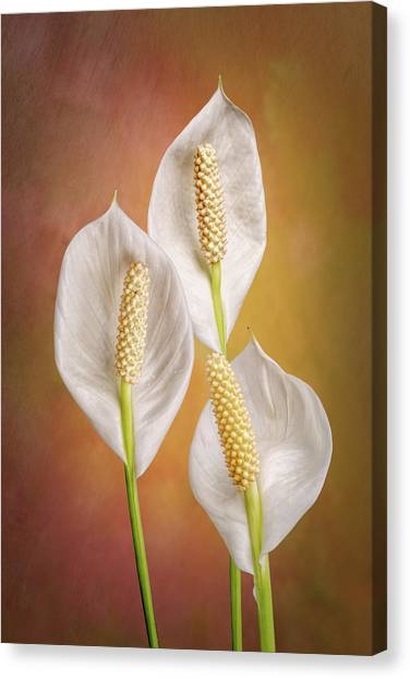 Perennial Canvas Print - Peace Lily Flowers by Tom Mc Nemar