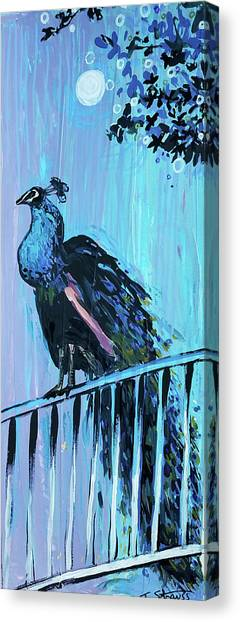 Peacock On A Fence Canvas Print