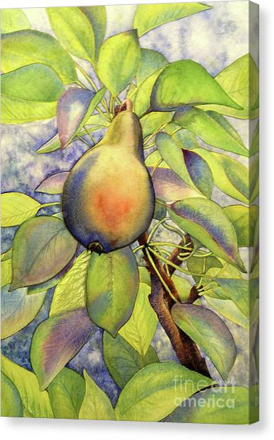 Pear Of Paradise Canvas Print