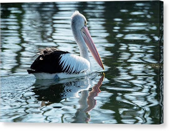 Pelican On The Lake Canvas Print