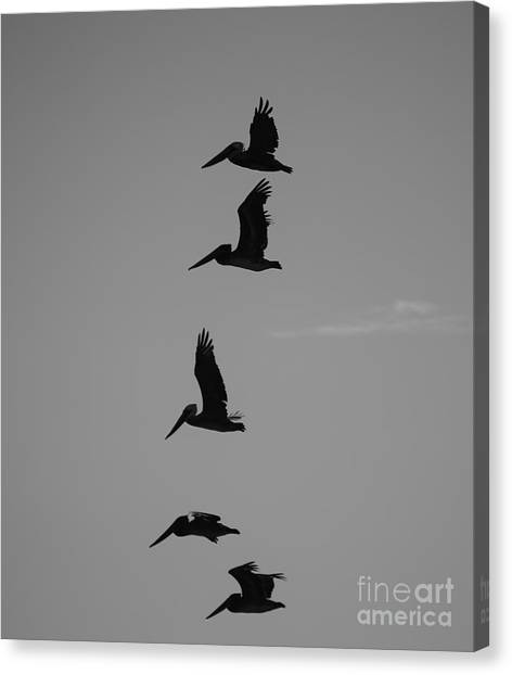 Canvas Print featuring the photograph Pelican Silhouette  by Jeni Gray